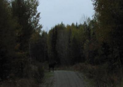 Moose-Guided-Gun7